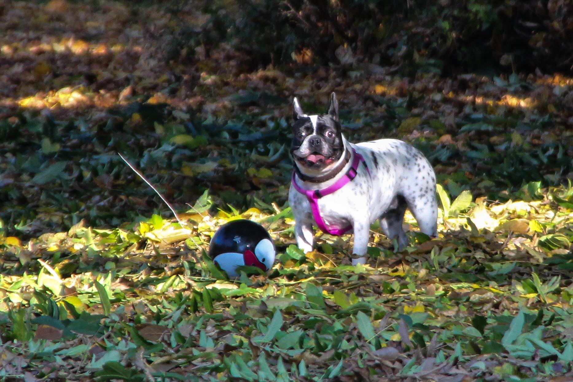 Hund an der Burg Linn