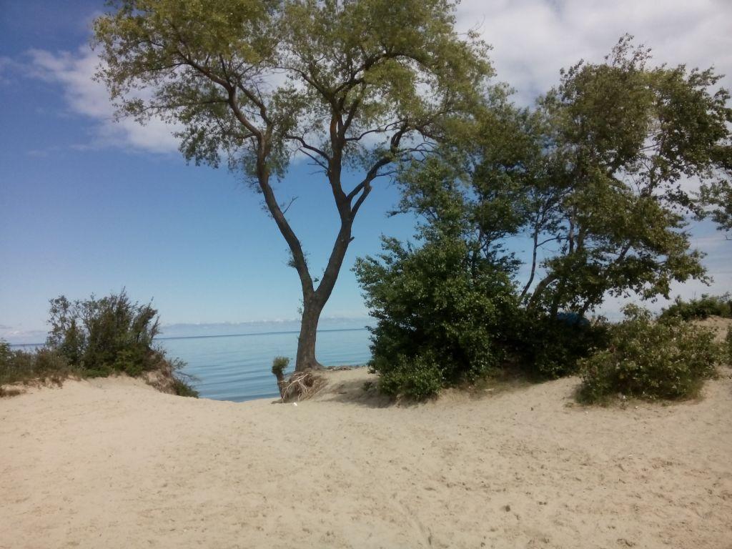 Strand auf der Kurischen Nehrung bei Selenogradsk