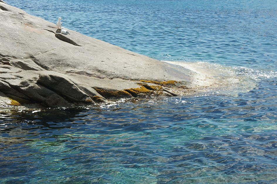 aussi les mouettes aiment les rochers