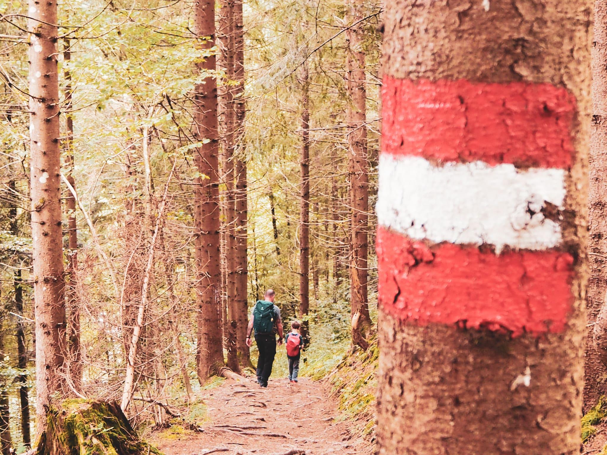 dichte Wälder