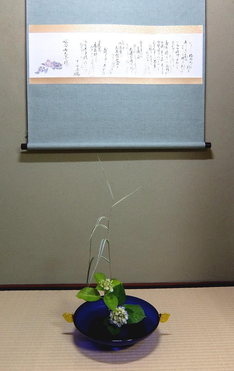 花 縞葦 紫陽花
