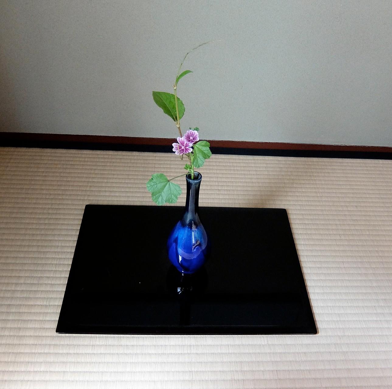 花 ゼニ葵