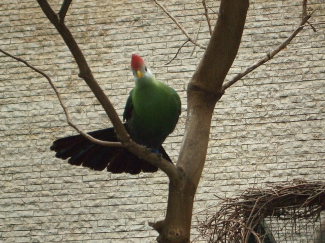 Vogel mit grümer Brust und roter Kopf