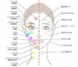 顔まわりの様々な筋肉