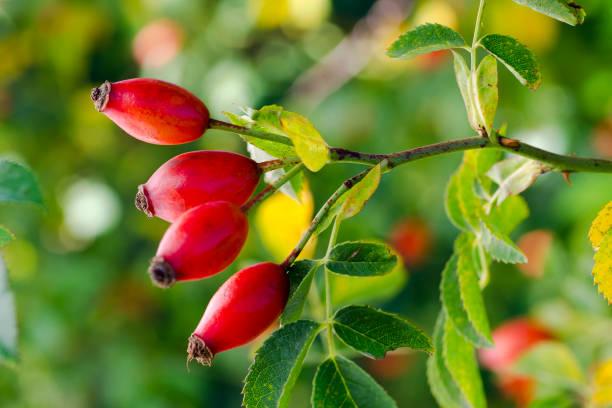 Polyphenole und Flavonoide