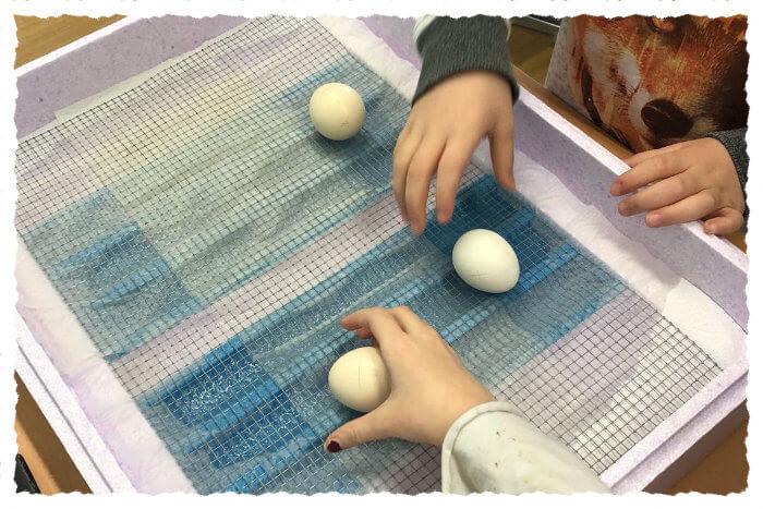 Eier einlegen in den Schlupfkasten.