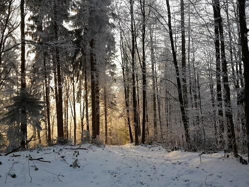 Licht zwischen den Bäumen - Ausblick
