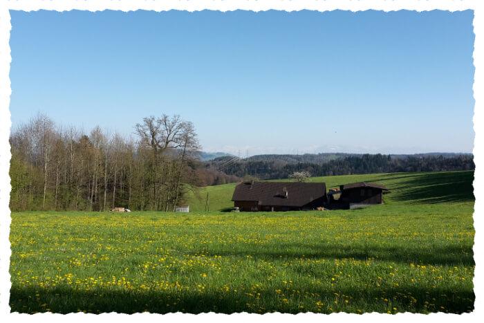Könighof Seitenansicht