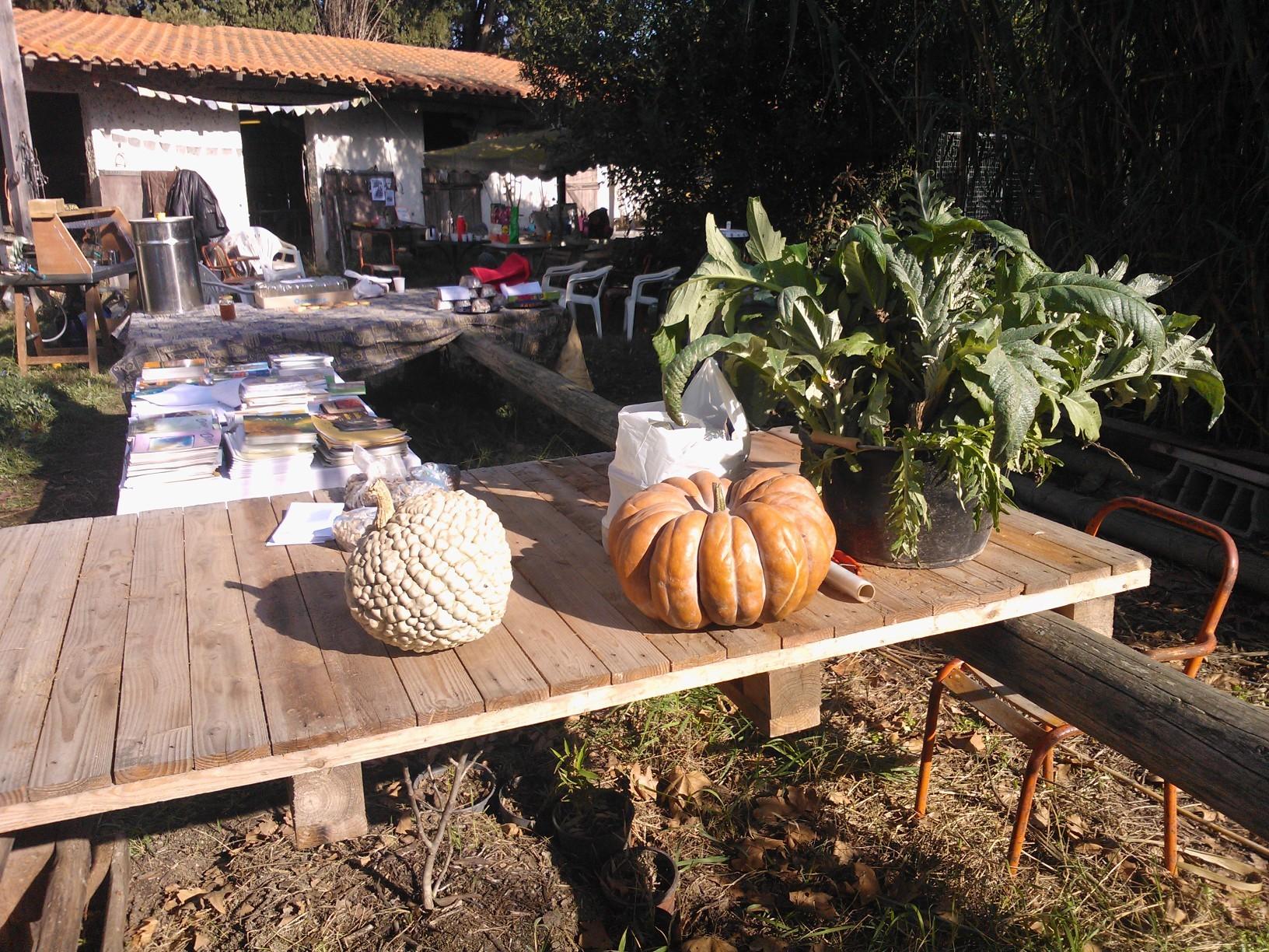 Les légumes (bios et biodynamiques)