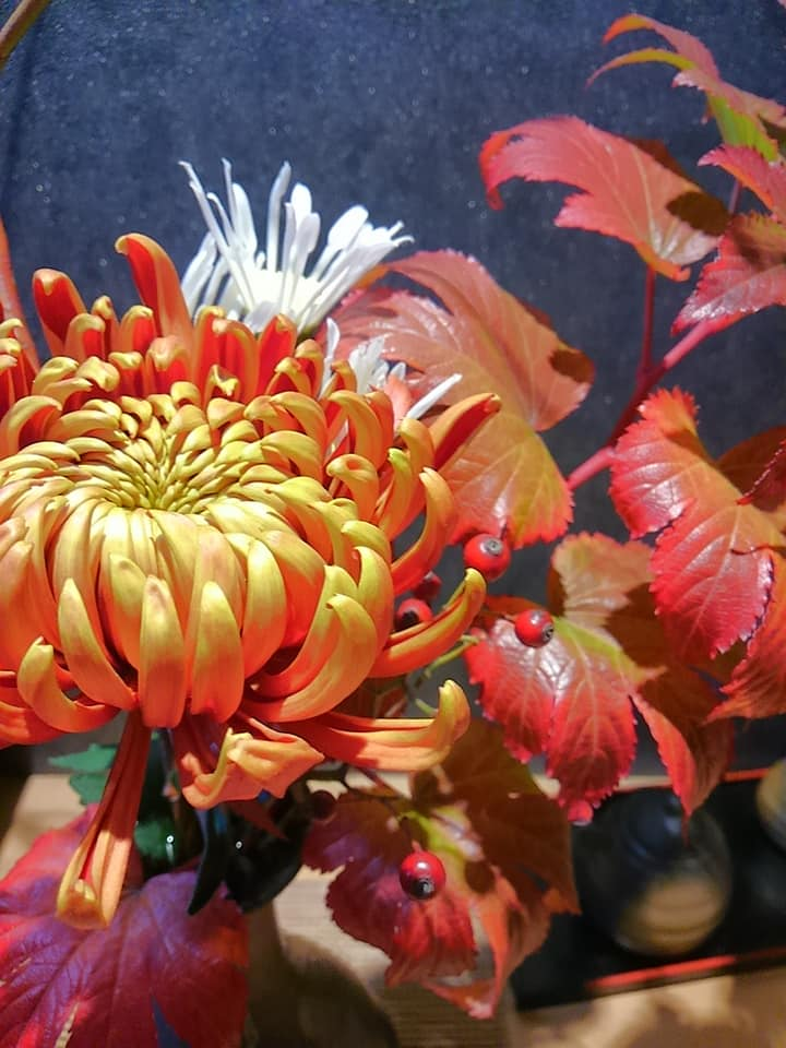 11月 深いオレンジの菊をカウンターに