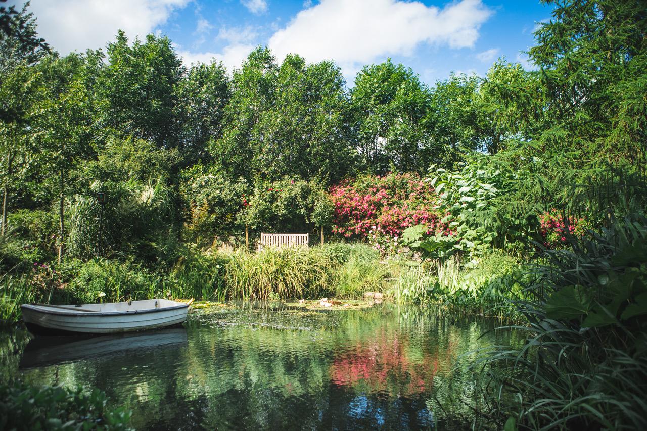 -mit vielen Fischen und wunderschön blühenden Seerosen,