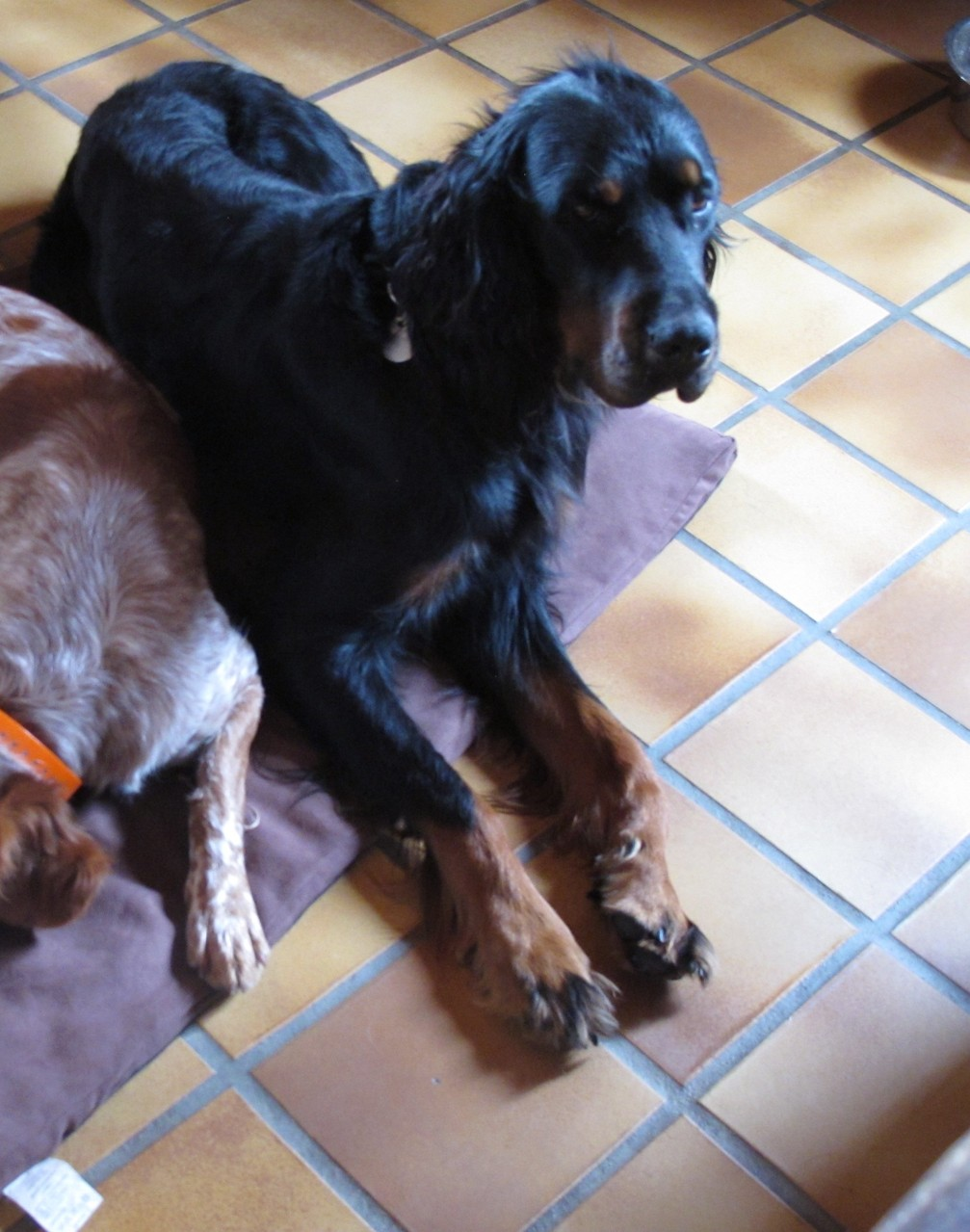 pension chien aveyron