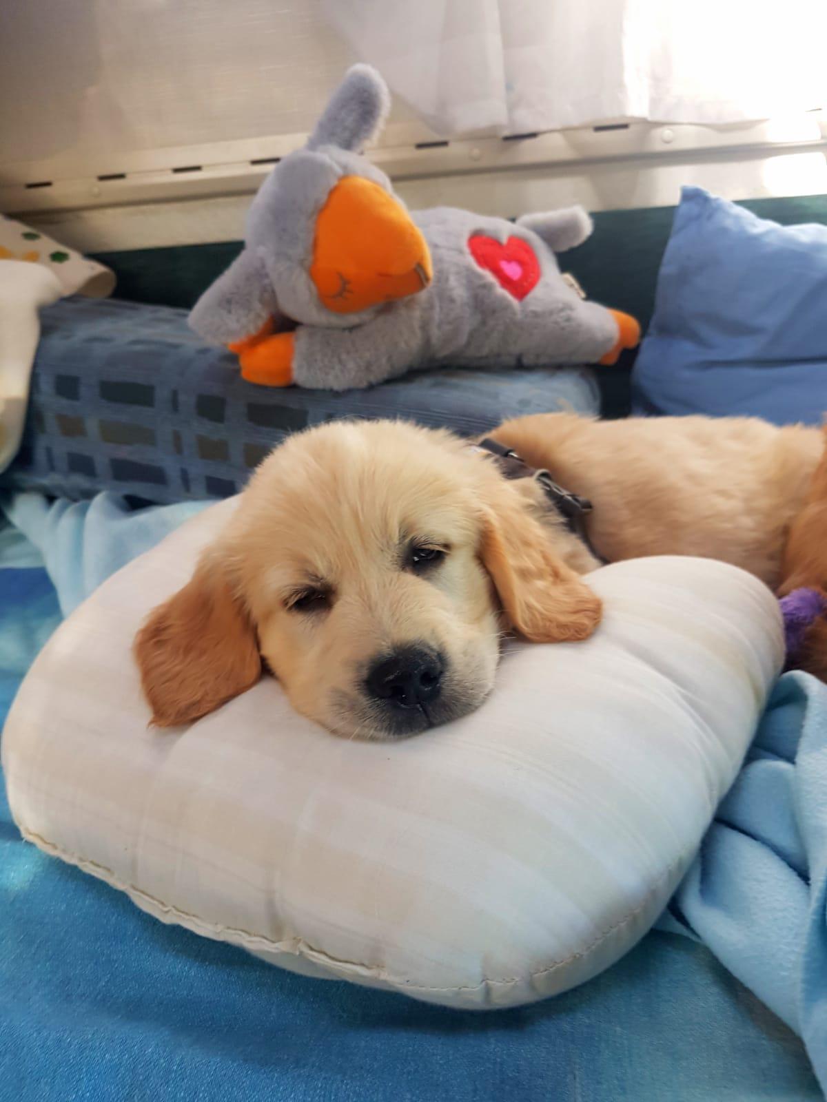 Mit dem Schlafschaf im Gepäck ins neue Heim