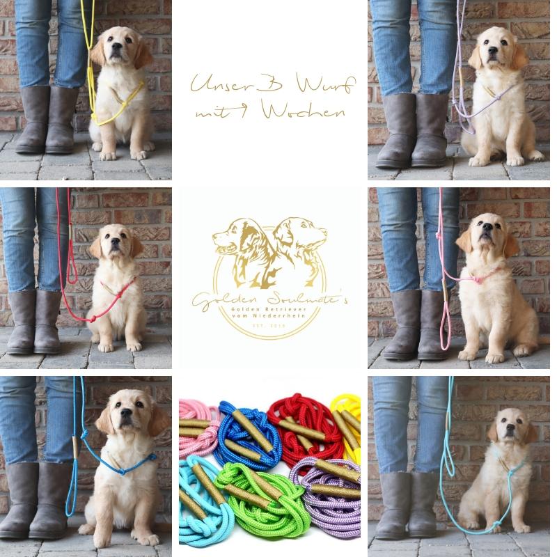 Wir bedanken uns bei Charlie Coco Hundeleinen für die tollen Welpen-Retriever-Leinen!