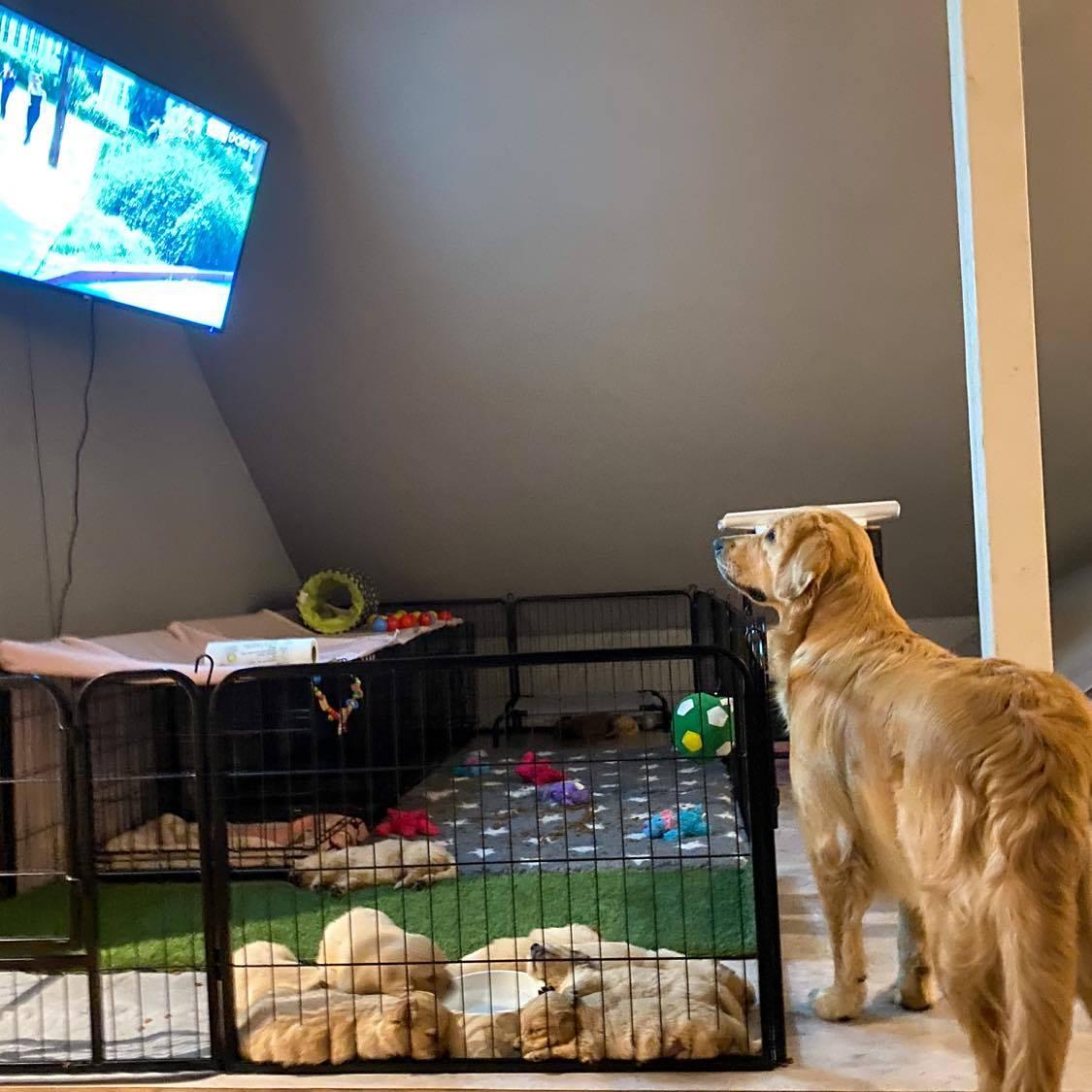 Groß und Klein profitieren vom HundeTV