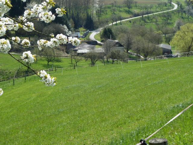 Grube Schottenbach im Schottenbachtal zur Kirschblüte