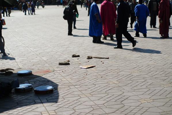 Une vipère heurtante morte à qui on a placé un oeuf de poule dans la gueule! Photo Michel Aymerich