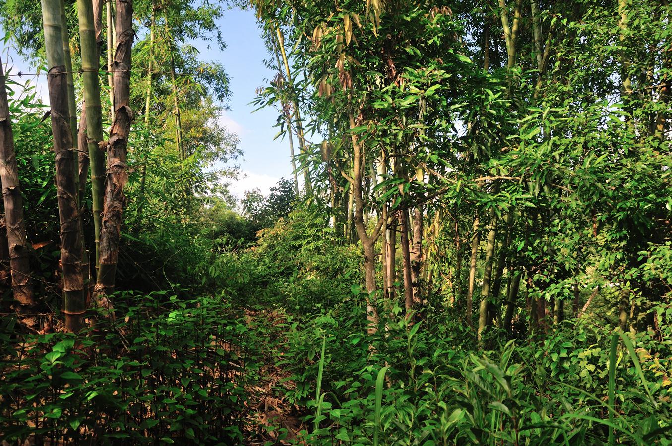 Un des lieux habités par un grand 眼鏡王蛇 cobra royal (Ophiophagus hannah), dont la proximité n'inquiéte pas le moins du monde les habitants! Xishuangbanna (Yunnan), Chine 2017 ©AYMERICH Michel