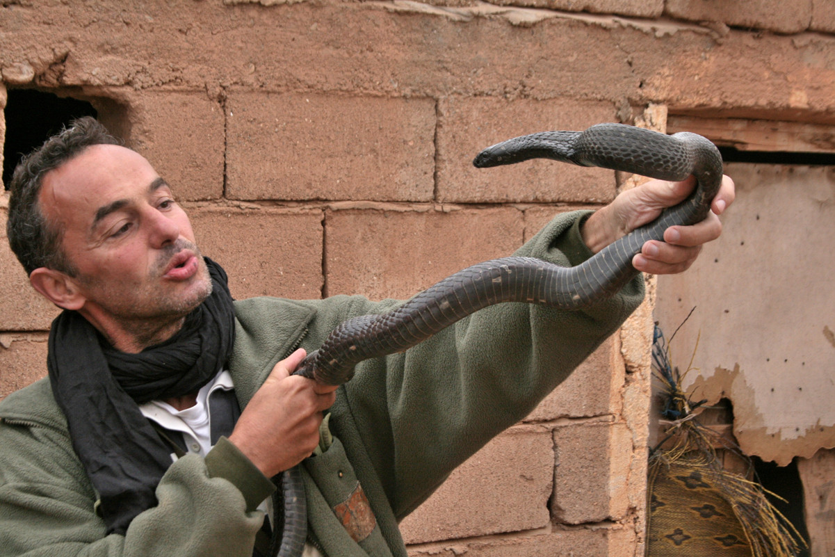 Un autre cobra au Maroc ©Photo Gérard Vigo