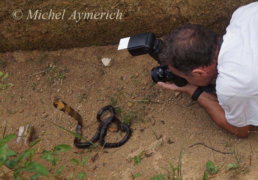 Là, avec un Cobra royal. Chine ©Chen Xinghe/Michel Aymerich