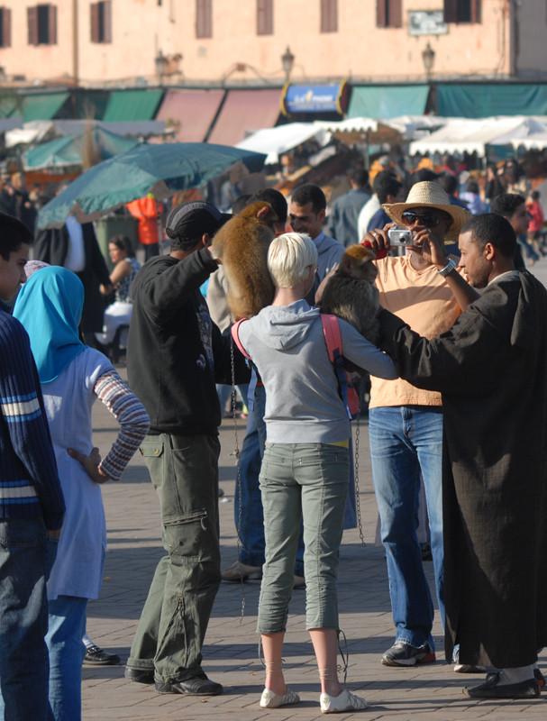 Magots à Marrakech. Le tourisme irresponsable!  © Michel Aymerich