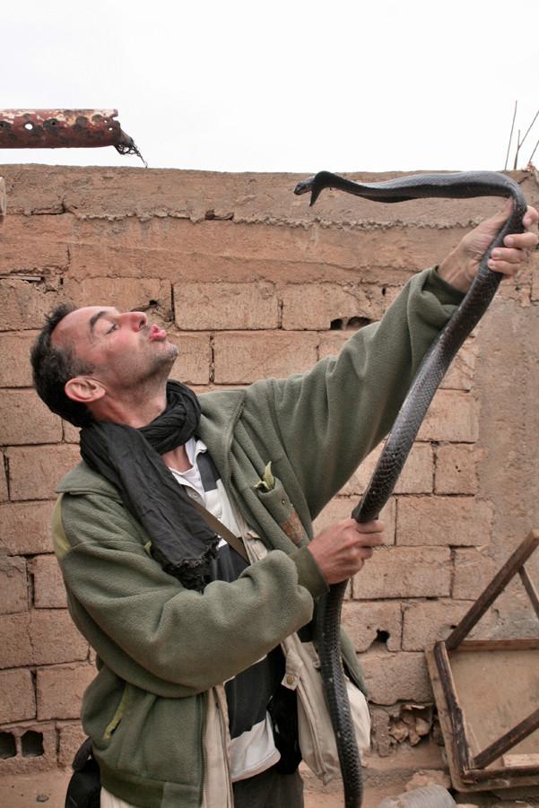 Comportement similaire chez un cobra du Maroc.  ©Gérard Vigo/Michel AYMERICH