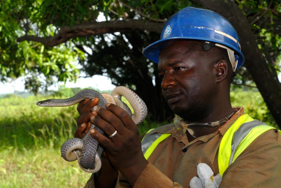 D'autres, comme celui-ci, découvrent que tenir un serpent, c'est possible, car tous ne sont pas dangereux! © Michel Aymerich