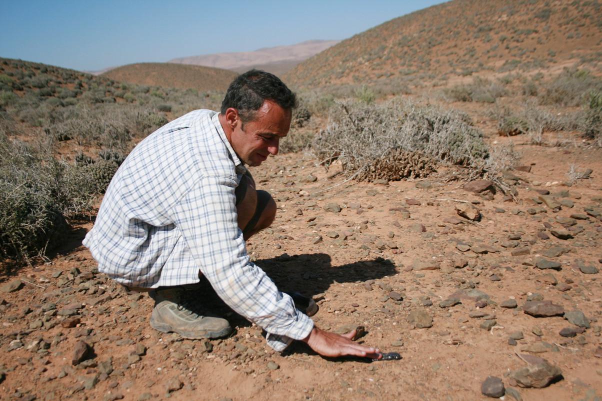 Je le caresse au bas du cou. Je sais que cela calme les représentants de cette espèce.  Le serpent se laisse faire... Mai 2008 ©Photo Gérard Vigo