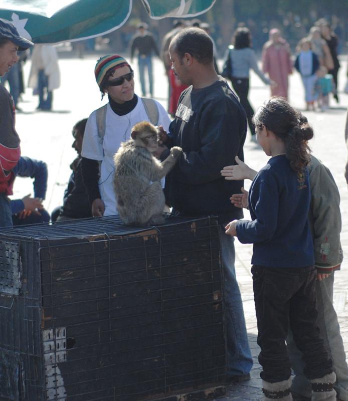 Magot à Marrakech. Ces jeunes filles ont-elles l'intution que ces singes sont des victimes?   © Michel Aymerich