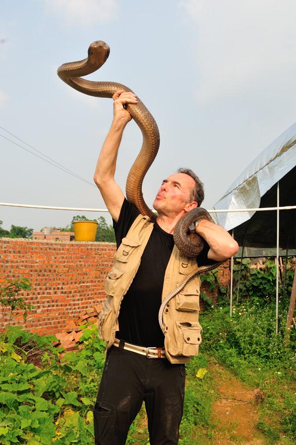 Avec  眼鏡王蛇 cobra royal (Ophiophagus hannah) Guangxi, Chine 2017 ©AYMERICH Michel