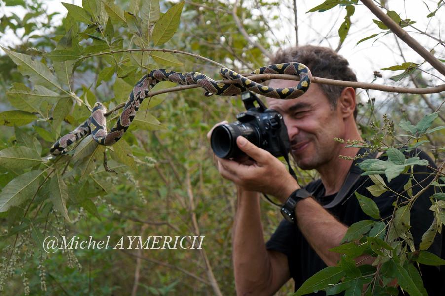 Photographiant une Couleuvre de Jade, Elaphe mandarina