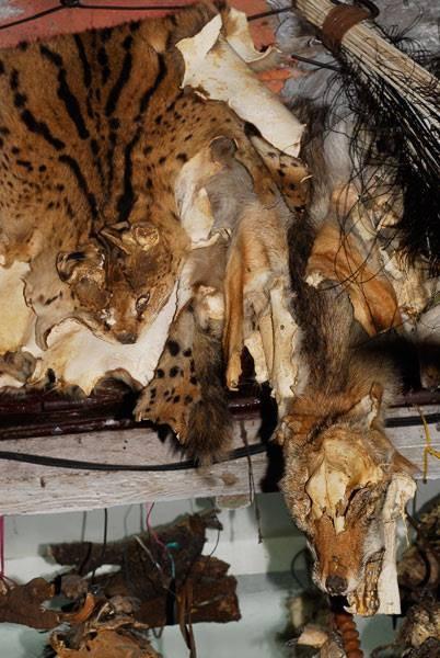 Peaux de serval et autres! Photo Michel Aymerich