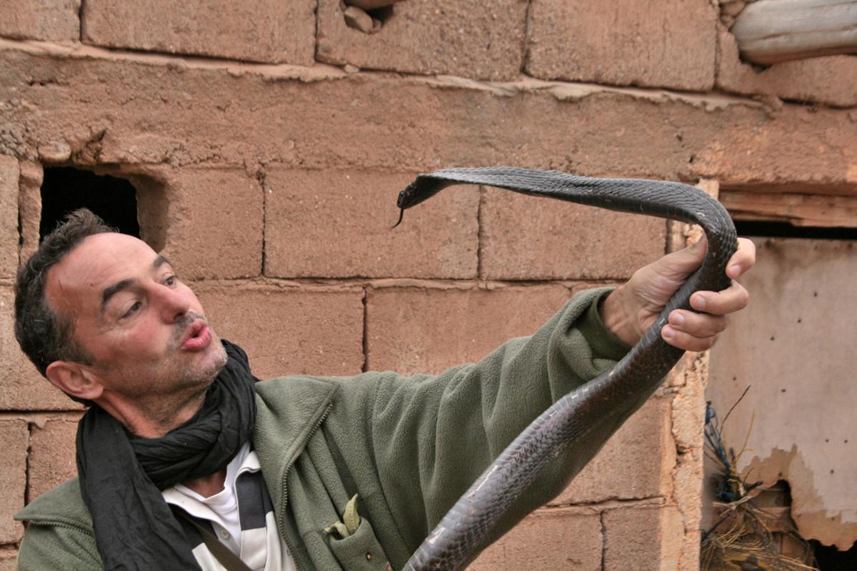 """Autre cobra avant """"caresses""""!  2011 ©Photo Gérard Vigo"""