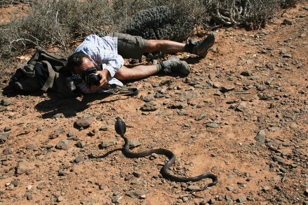 Je me couche même devant le cobra qui ne manifeste pas la moindre agressivité, loin des légendes tant répandues par des langues ignorantes... Mai 2008 ©Photo Gérard Vigo