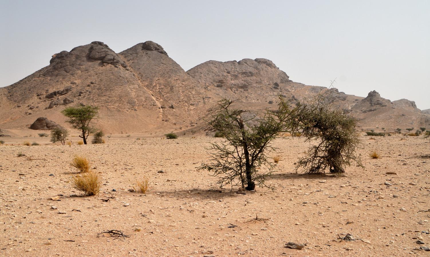Massif de Leglet, près d'Aousserd. Sahara ©Michel AYMERICH