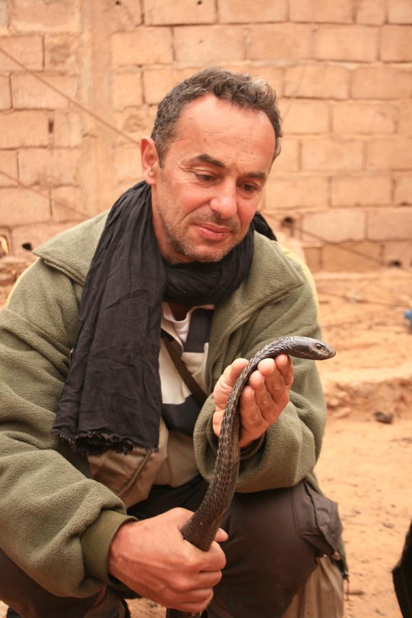 Un autre cobra au Maroc. Après avoir été caressé au bas du cou, le même cobra est devenu passif! ©Photo Gérard Vigo