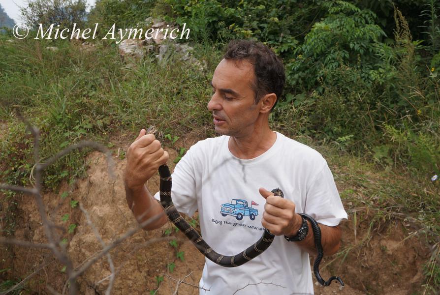 Avec un jeune Cobra royal, Ophiophagus hannah