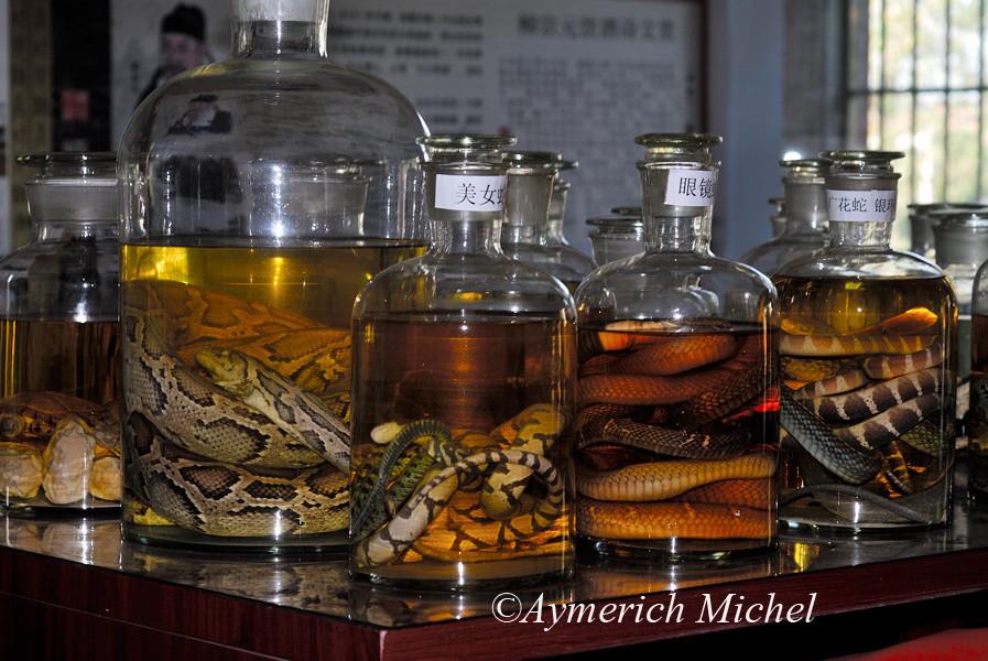 Serpents dans l'alcool exposés dans un local de présentation d'une ferme d'élevage de serpents à Yougzhou dans le Hunan......