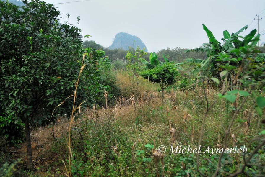 Dans ce champ de cultures, photographier des serpents n'aura pas dérangé la moindre paysanne ou le moindre paysan...
