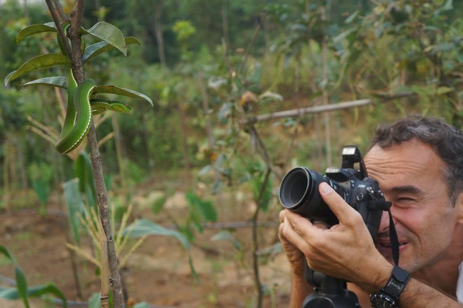 Je photographie une Vipère des bambous. Chine ©Chen Xinghe/Michel Aymerich