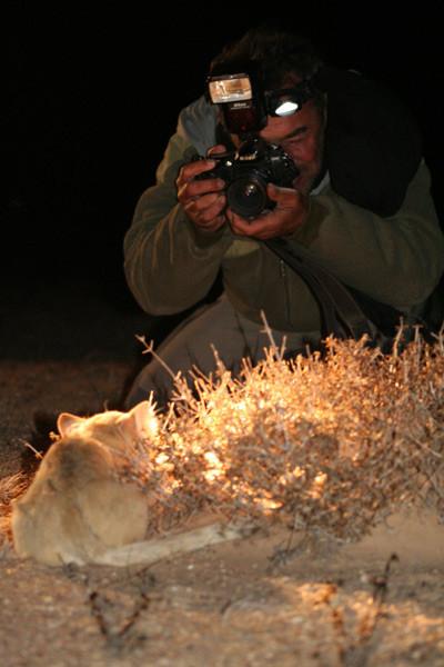 Je photographie un chat des sables...