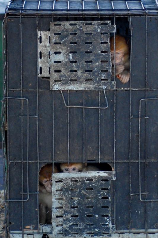 Comment ne pas comprendre le malheur qui frappe ces magots? © Michel Aymerich