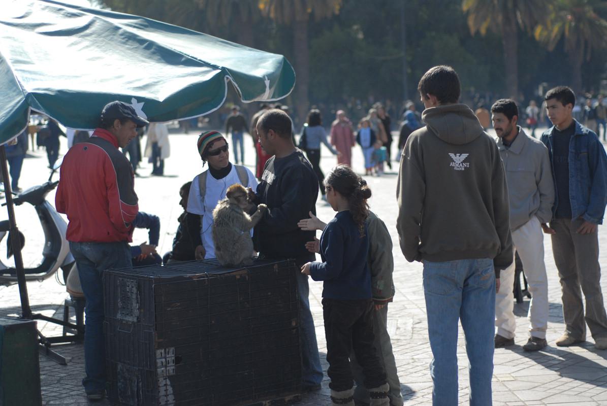 Magot à Marrakech  © Michel Aymerich