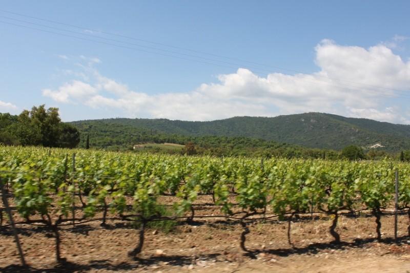 Weinberge Hinterland Côte d'Azur