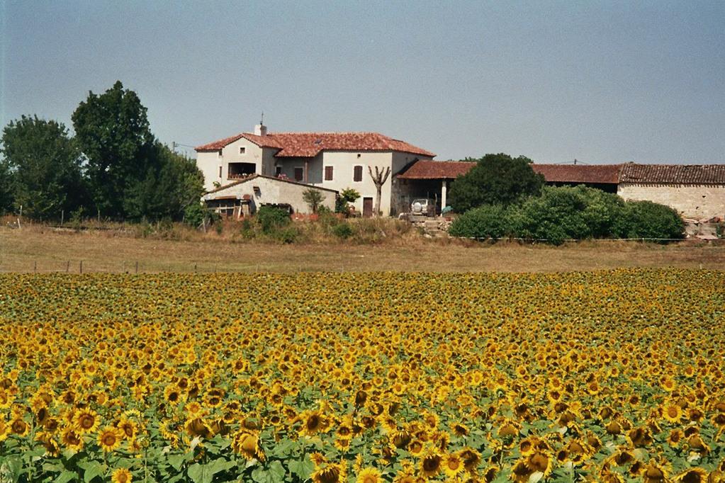 Sonnenblumenfeld Provence