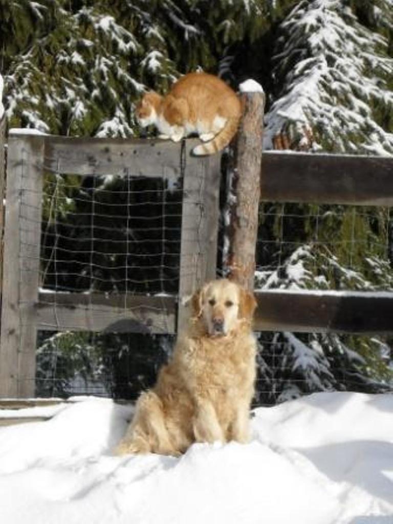 Hund und Katz vertragen sich sehr gut
