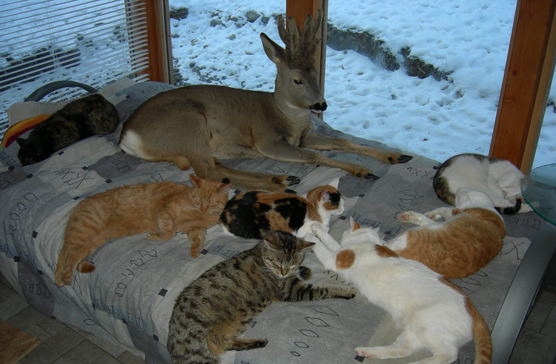 Unsere Katzen - großteils aus dem Tierheim