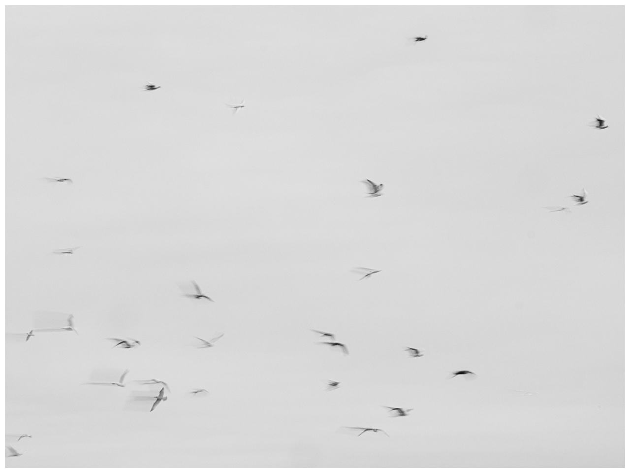 Blankenfelde III. Birding Arkenberge