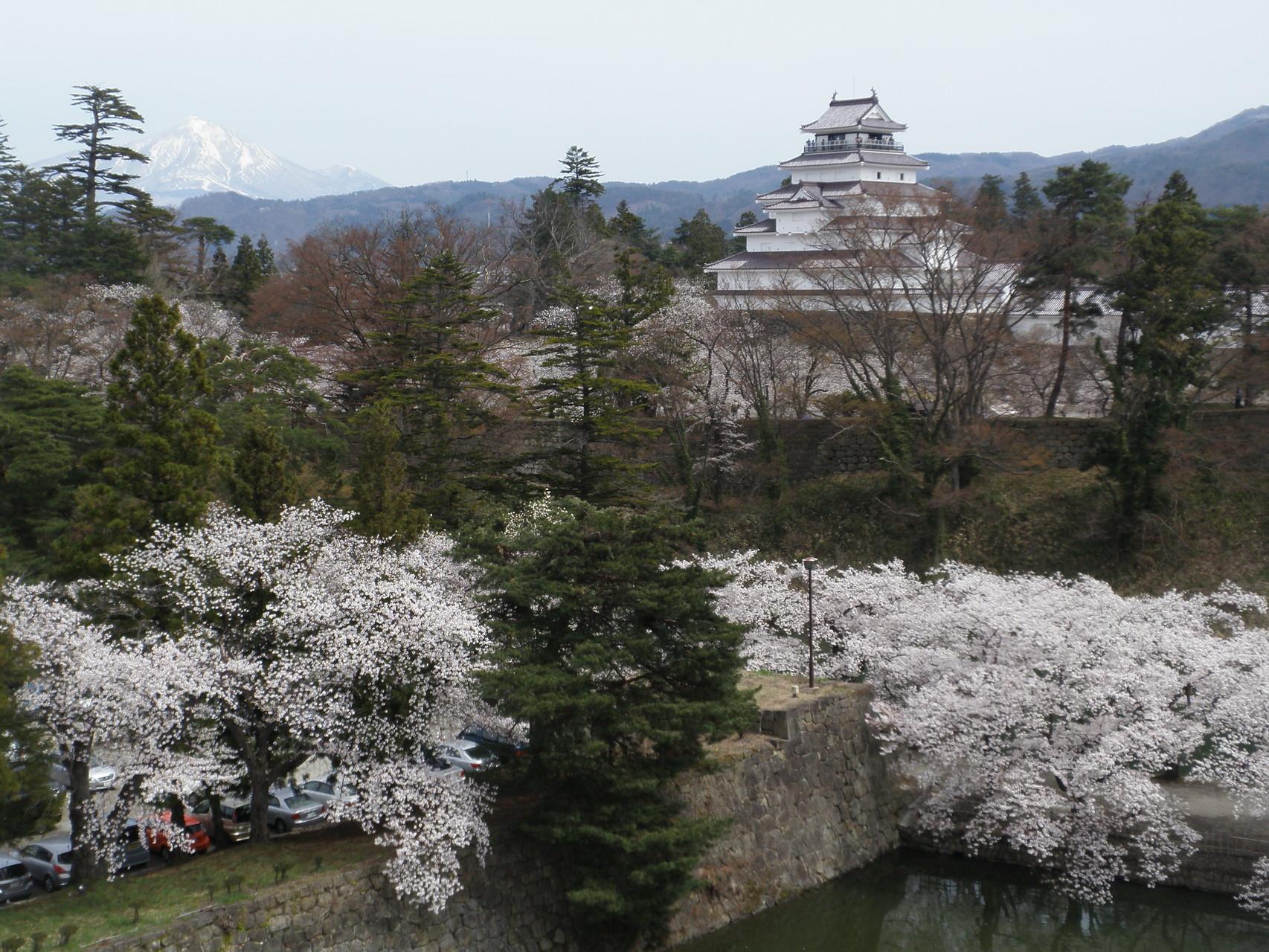 磐梯山の雪と桜のコントラスト。