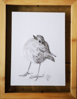 5. Robin...Pencel drawing 2 Potlood tekening ingelijst tussen twee glasplaten.